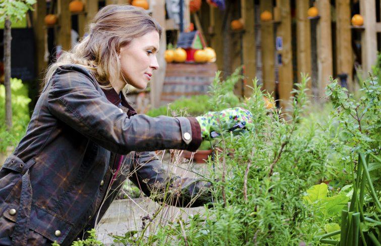 Potager : je profite des ponts de Mai pour planter mes fruits et légumes de mi saison