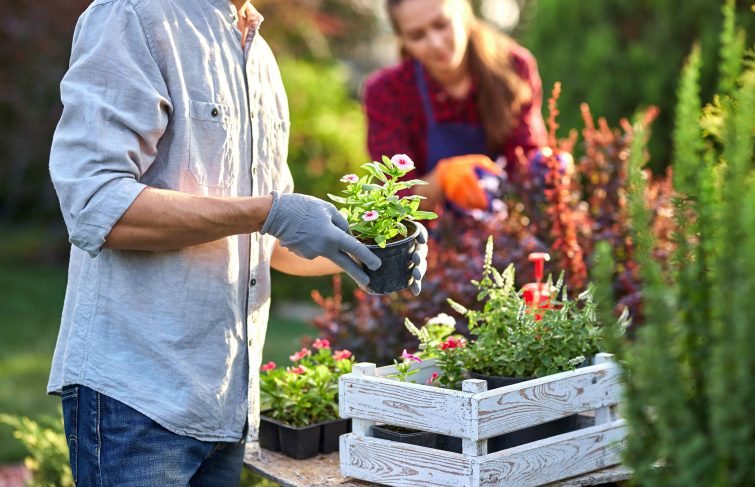 Attention le printemps arrive ! Comment bien préparer mon jardin ?