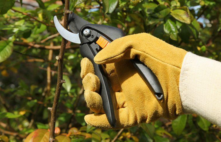 Entretenez votre jardin à moindre frais : payez en deux fois votre taille de haie et d'arbre et bénéficiez de 50% d'impôts !