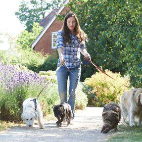 Pas le temps pour la promenade de vos animaux ?