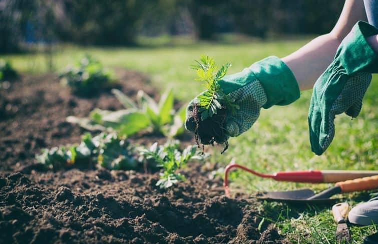 Quels sont les travaux à effectuer dans mon jardin en avril ?