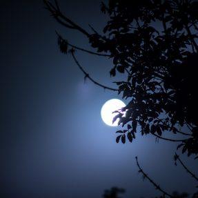 Astuces jardinage : le calendrier lunaire de décembre
