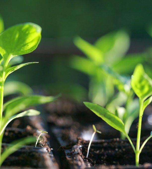 La période des semis a commencé, suivez nos étapes pour les réussir !