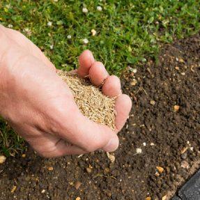 Comment préparer et semer son gazon ?