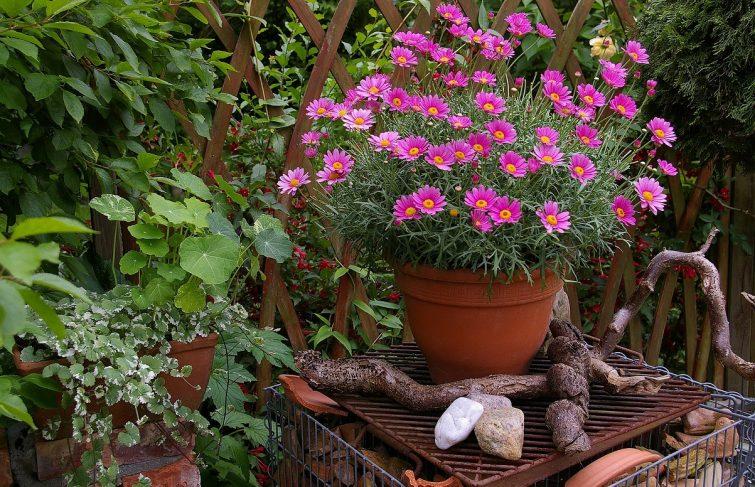 Profitez des ponts de mai pour préparer votre jardin !