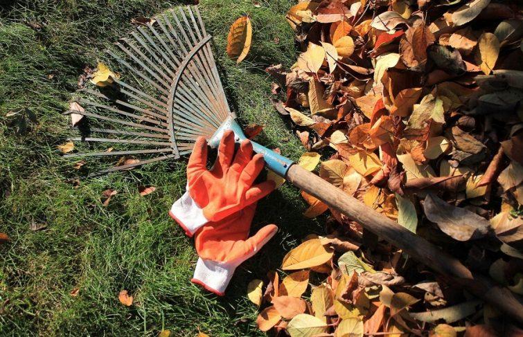 Automne : quels sont les travaux de jardinage à réaliser ?
