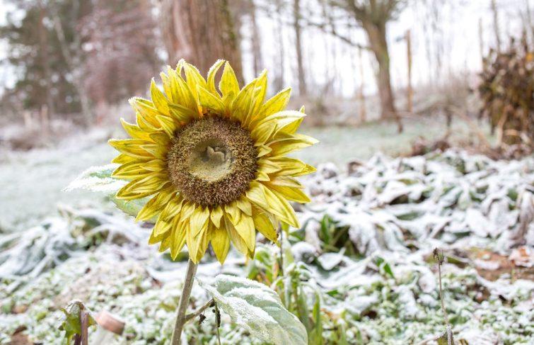 Hiver : quels sont les travaux de jardinage à réaliser ?