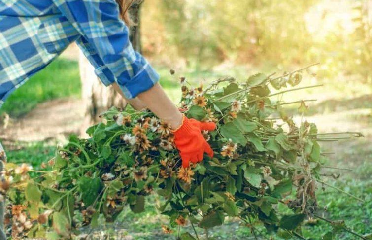 Conseils pratiques pour nettoyer son jardin