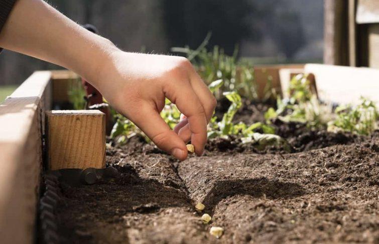 Les semences paysannes enfin accessibles aux jardiniers amateurs
