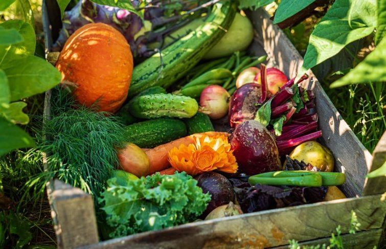 Les fruits et légumes de saison tout au long de l'année