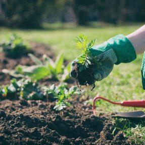 Potager : comment faire pousser ses légumes plus vite ?